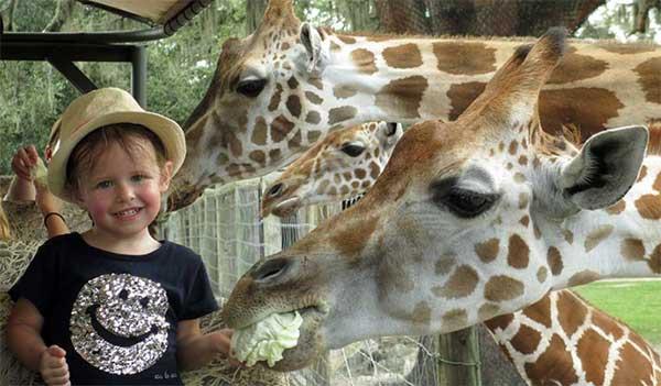 Animal Encounters - Giraffe Ranch