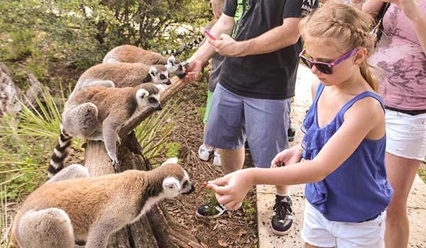 Animal Encounters - Safari Wilderness
