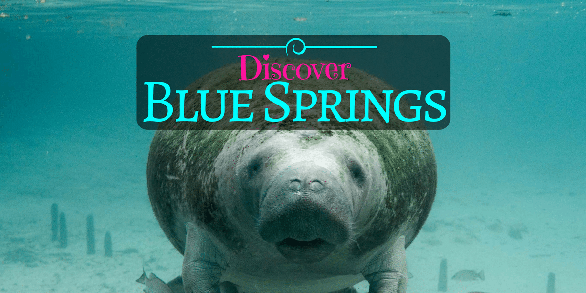 Blue Springs: Gorgeous State Park Just A Short Drive From Orlando